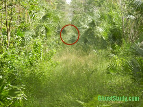 Ghost in Florida Swamp
