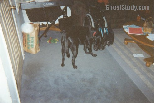 orb ghost on film camera