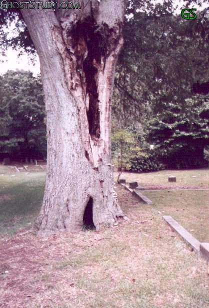 ghost man in the tree illusion real scary